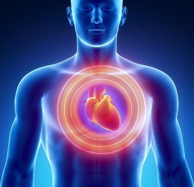 сердце. духовный смысл