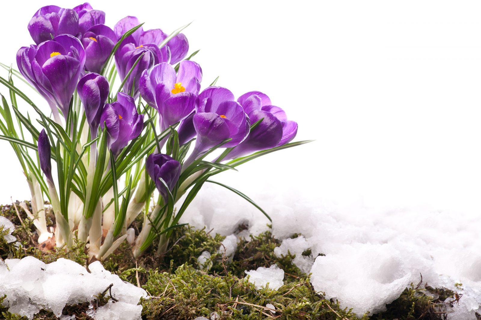 Рождённые весной